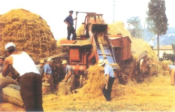La trebbiatura for Da dove proviene il grano della barilla